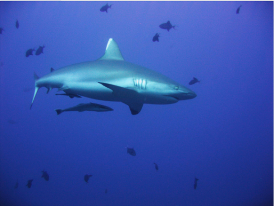 Evidence from the Shark Spotting Programme reveals that great white sharks in Cape Town waters are disappearing. Picture: Bloomberg