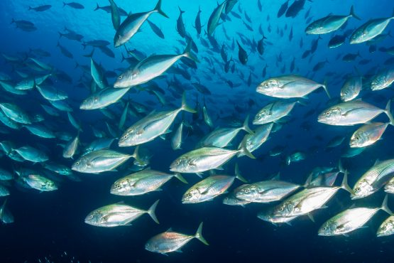 The search for growth saw Oceana invest $13 million in new fishmeal and fish oil facilities in Angola and Namibia in 2015. Picture: Supplied