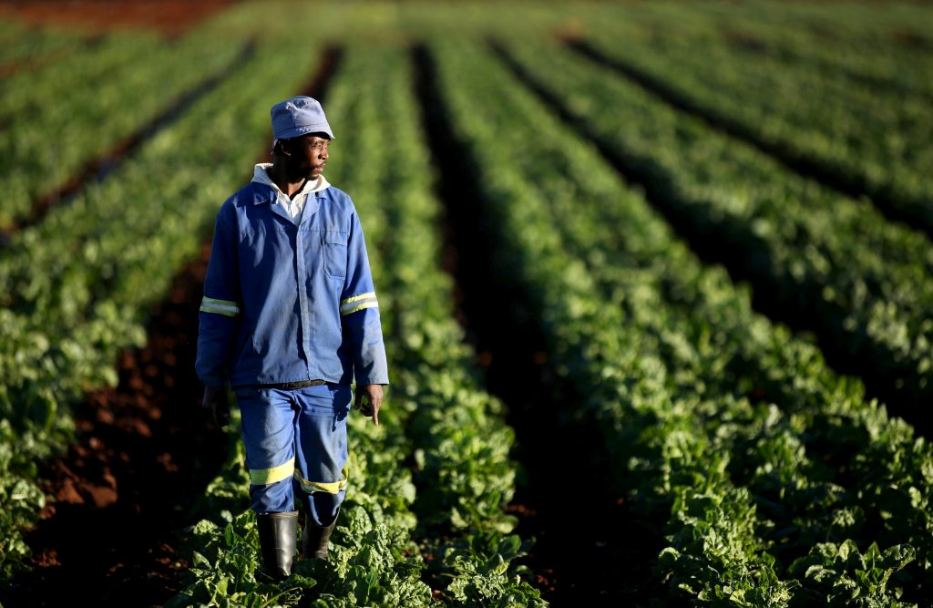 Young entrepreneurs lend glamour to African agriculture