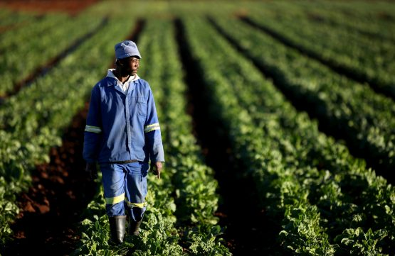Climate pressures are adding to farmers' woes, with extended dry periods, erratic rainfall and floods leading to crop losses and declines in yields. Picture: Siphiwe Sibeko, Reuters