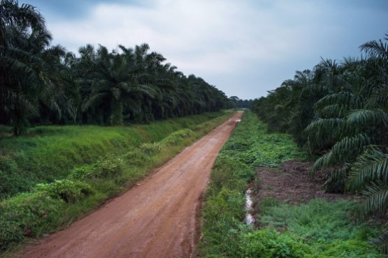 Sime Darby palm oil plantation in Selangor, Malaysia. Picture: Sanjit Das/Bloomberg