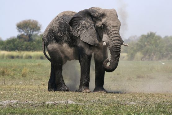 An increase in elephant numbers is leading to multiple problems for Zimbabwean farmers. Picture: Reuters