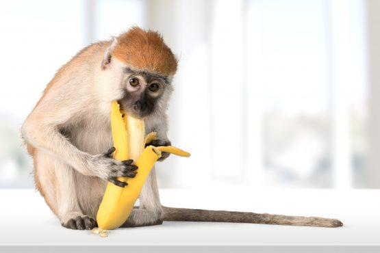 'Don't let society, norms and conventions throw cold water on you as you reach for that banana!' Picture: Shutterstock