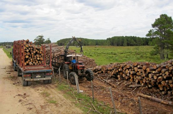 State forestry company Safcol has raked up a hefty irregular expenditure bill that has been condoned by management. Picture: Shutterstock