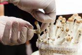 First pot, then magic mushrooms? Decriminalisation is spreading