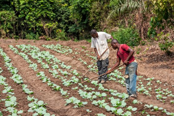 Smallholder farmers face barriers but digital technologies have the potential to increase access to information and resources. Picture: Shutterstock