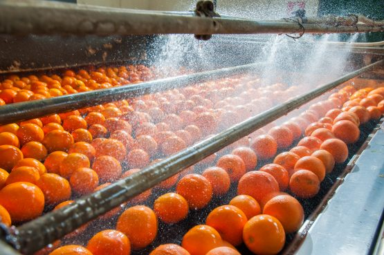 SA is the second-largest source of imported oranges in the US and also ships table grapes, litchis and avocados to the world's biggest economy. Image: Shutterstock