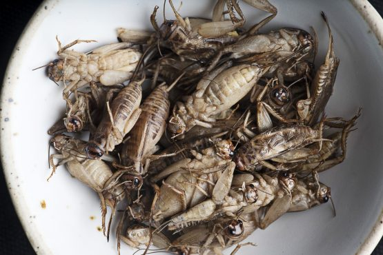 A Cape Town-based pop-up store is expanding the range of meals that can be made from insects. Image: Brent Lewin, Bloomberg