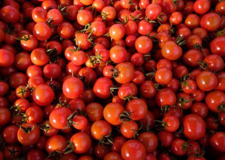 Nigeria's biggest tomato facility idle again as farmers dump crop
