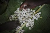 $100bn chocolate industry still plagued by child labour