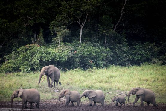 Gabon's forest is home to a myriad of animal and plant species has attracted the attention of SA based SFM Africa, which focuses on sustainable forest projects. Image: Amaury Hauchard, AFP via Getty Images