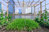 Crops in the clouds: The rise of rooftop farming in space-starved Hong Kong