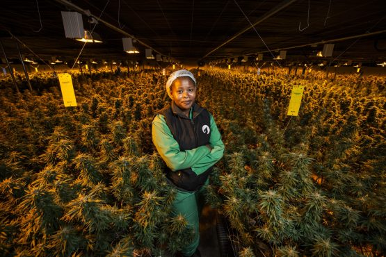 A tiny African kingdom wants to export its cannabis to the world