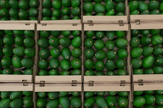 Hass avocados sit in boxes at the Tropy Fruits processing facility in Caldas department, Colombia. Image: Eduardo Leal/Bloomberg