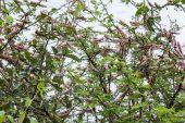Brazil, Argentina issue warnings as locust swarm crosses region