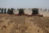 Zimbabwe grain board urges workers to get vaccinated by end-July