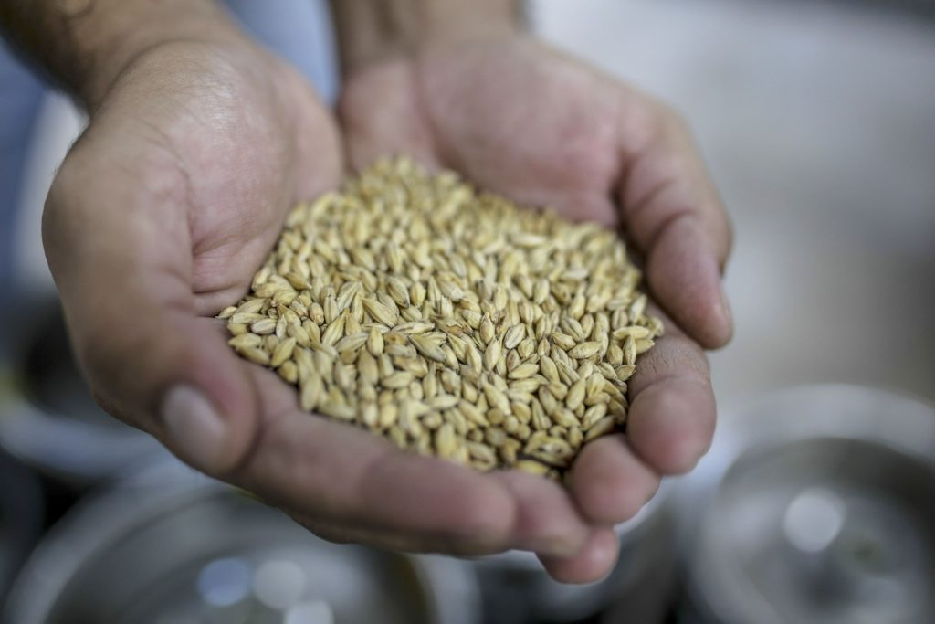 SA barley farmers face bleak outlook as alcohol ban hurts demand