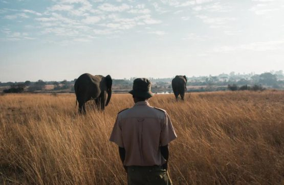 Militarised conservation has had unfortunate consequences. Image: Shutterstock