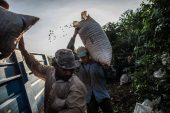 The world is facing a coffee deficit in supply chain 'nightmare'