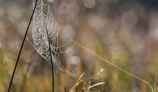 The dew was thick on the grass, decorated everywhere with scores of spider webs glistening with beads of moisture. Image: David Weaver