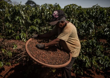 World's oranges, coffee at risk as Brazil runs out of water