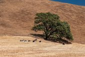 Worst drought in decades escalates threats across US west