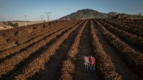World's top coffee crop keeps shrinking, leading to shortage